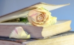 rose-2101475_1280.jpg