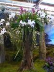 2014-06-03 Jacquotte Floralies.jpg