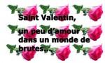 saint valentin roses.jpg