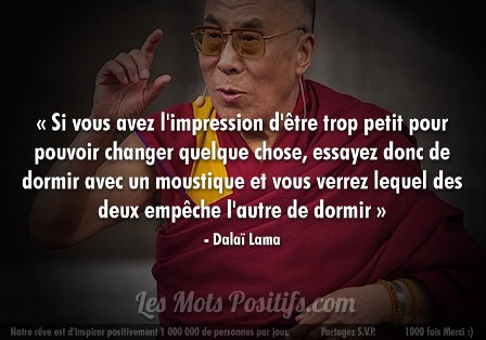 citation moustique Dalai lama web.jpg
